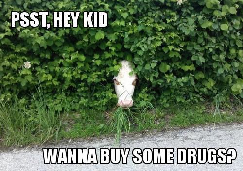 Shady Cow. .