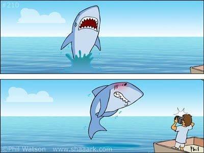 Shark, you so silly.. .