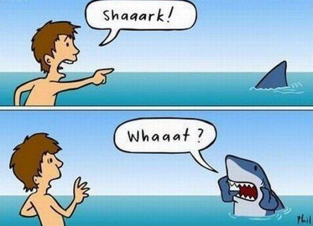 Shark. . SKCJ