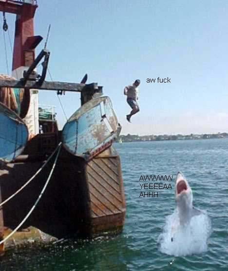 Shark Bait. .
