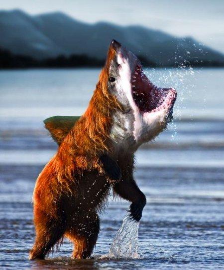 SHARKBEAR. .... We're truly fuked now. we are fuked now Shark Bear sharkbear Boobs