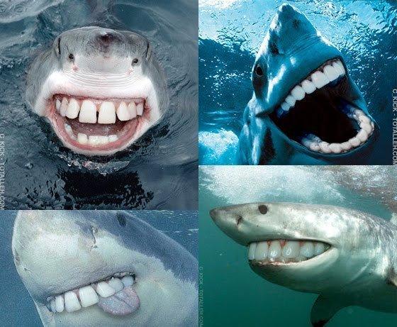 Sharks with human teeth - photo#39