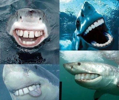 Sharks.. .
