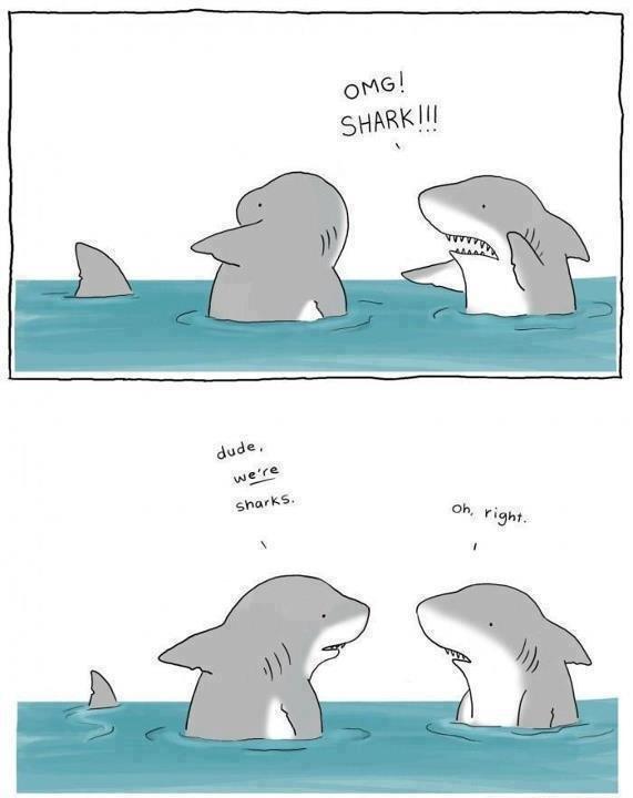 Sharks. .