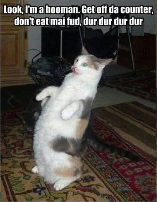 "silly hooman. dur dur dur dur.... thm' t "" fntd, thtt thit cat Imitating silly hooman funny"