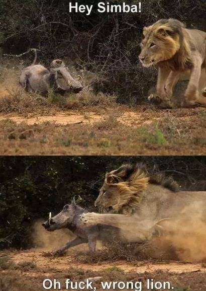 Simba pls. Senpai please don't be that rough.... Hey Simba! fak