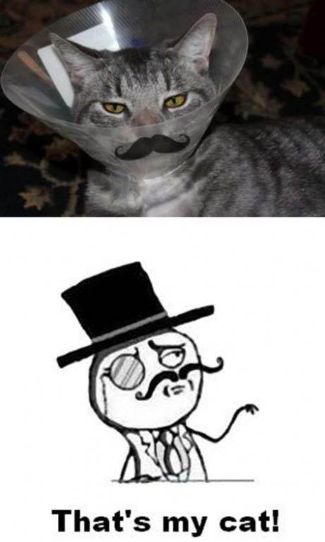 Sir cat.. . That' s my cat!. ok...