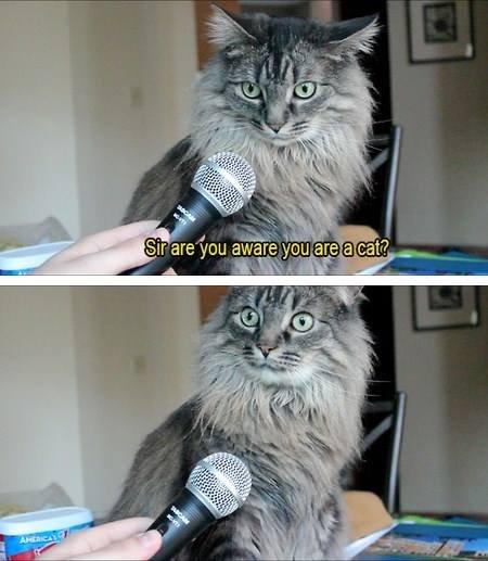 Sir.. YFW.. hfw lol funny Cats sir wait wat