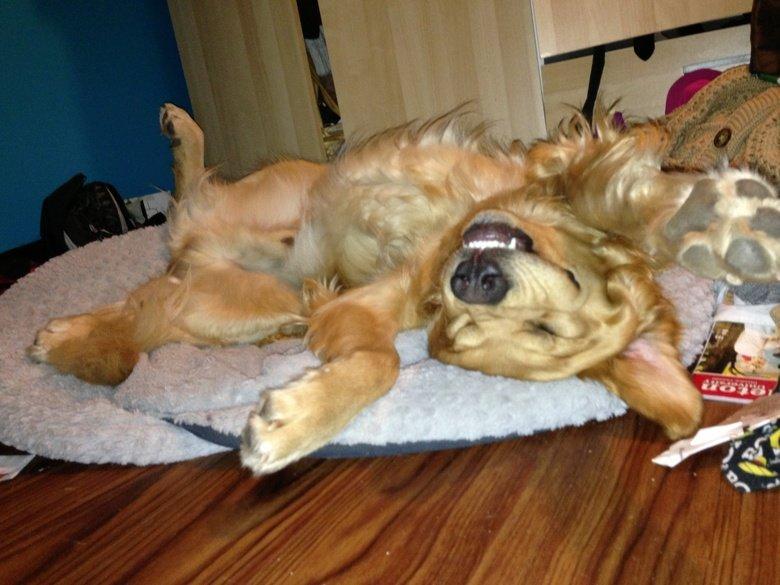Sleeping beauty. How my weirdo dog sleeps.. Thats pretty much how all of us sleep.