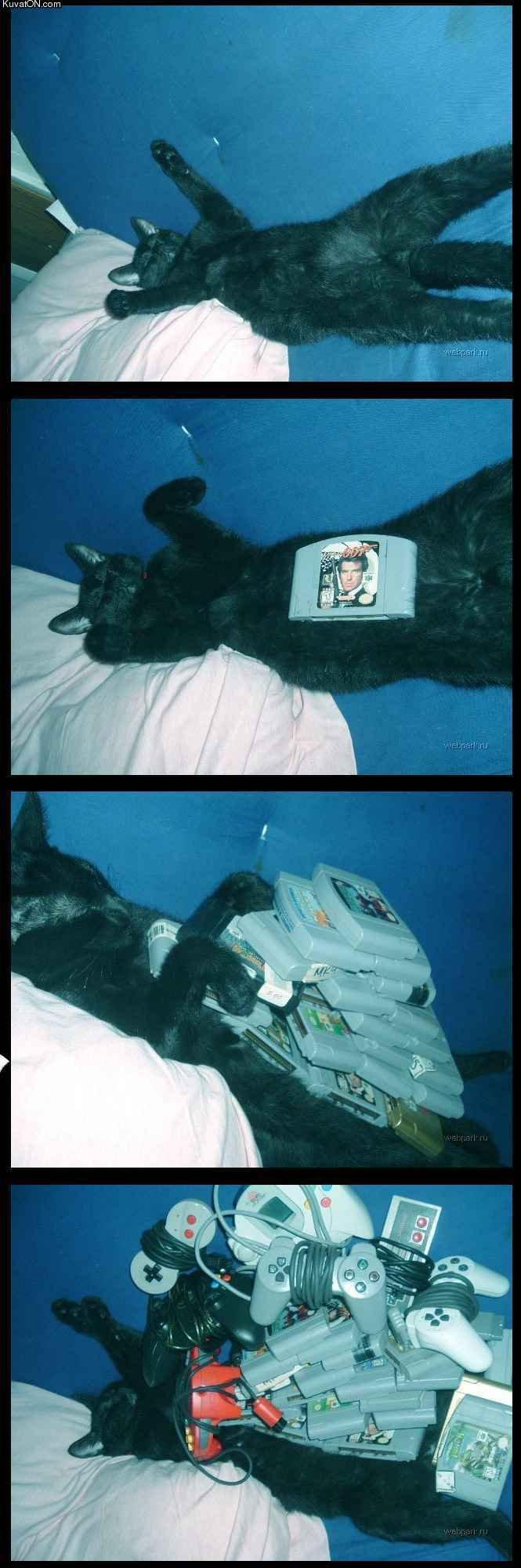 "Sleeping Cat. Rate! . Kuv . cxy. ""Looks like this pussy......"" Puts on Sunglasses ""Can take a lot."" YYYYEEEEEEAAAAAHHHHH"