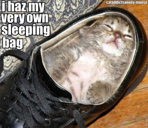Sleepy Kitty. .