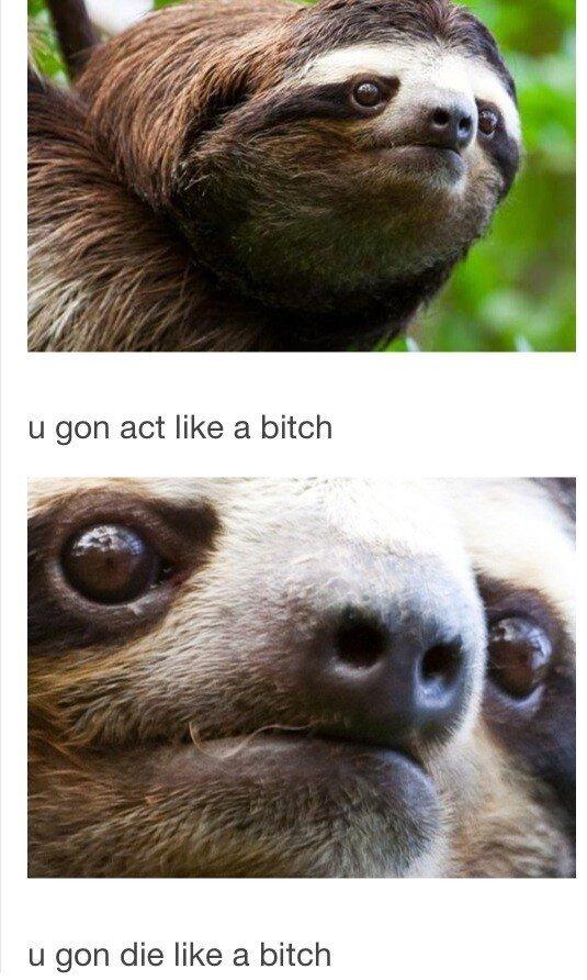 Sloth. . u gen die like .rial bitch