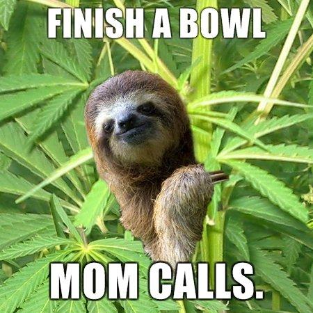 sloth. sloth takes a hit.. sloth weed hit Mom
