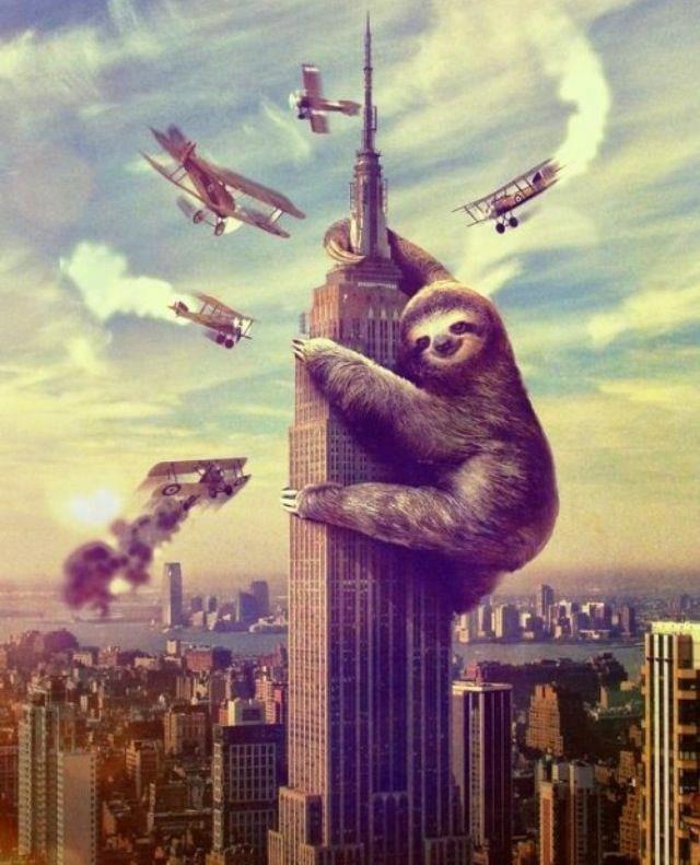 sloth. . sloth kingkong wallpaper