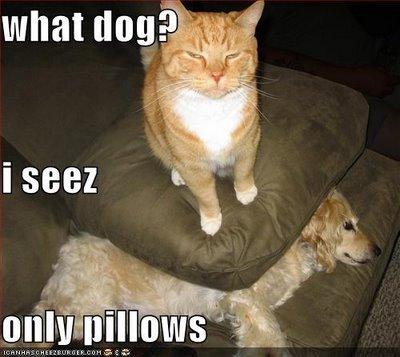 Smart Cat?. . what tlok