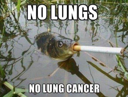 smart fish. HA!!. M NINE (MINI: -EB