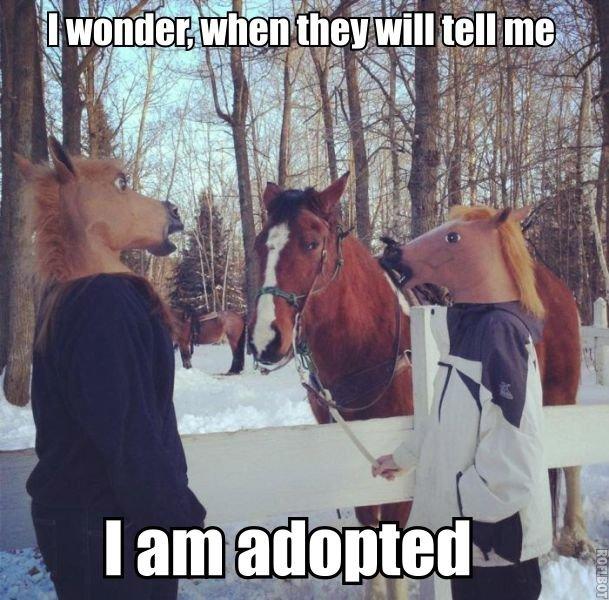 Smart horse. OC captions. asdasdasdasd