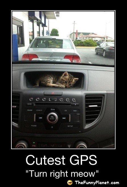 "So cute!. . Cutest t: siilis Turn right meow"" Cute cat gps"
