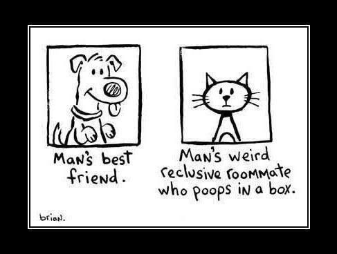 So true. . s best plea/ s utburd Friend . reclusive . oretty who poops nu a box.. CAAATS!!!!
