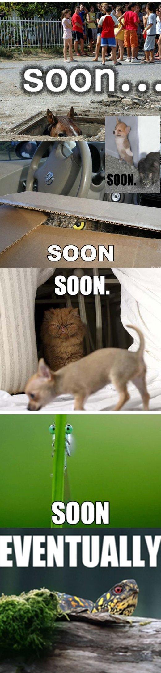 soon animals. soon. soon funny comed