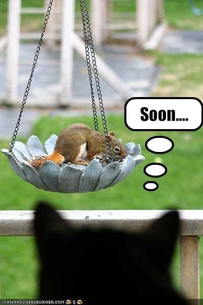 Soon. Soon my lil squirrel...soon. cat Squirrel soon