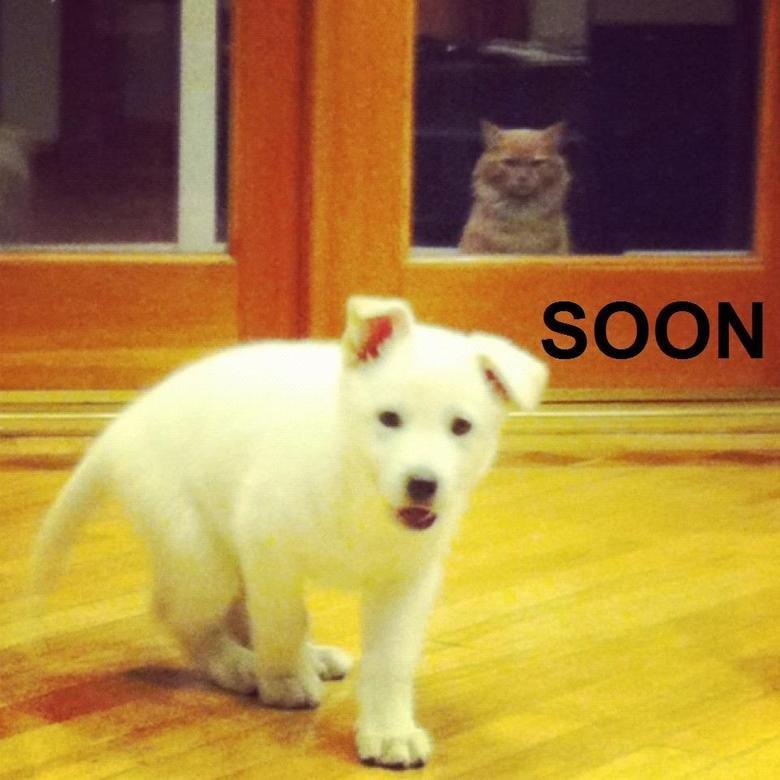 Soon.. .