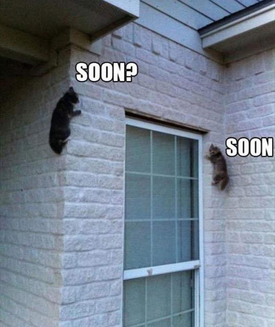 Soon?. .