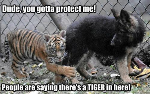 Sooo cute. . I'll Mia protect me.