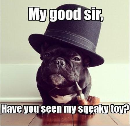 Sophisticated dog. . seen my lla, legless