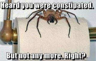 Spider bro makes a comeback. We found are long lost bro!.