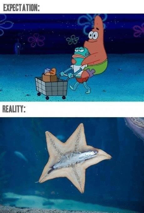 Spongebob Humor. .. meep