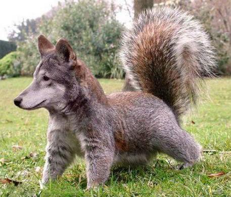 Squirreldog. .