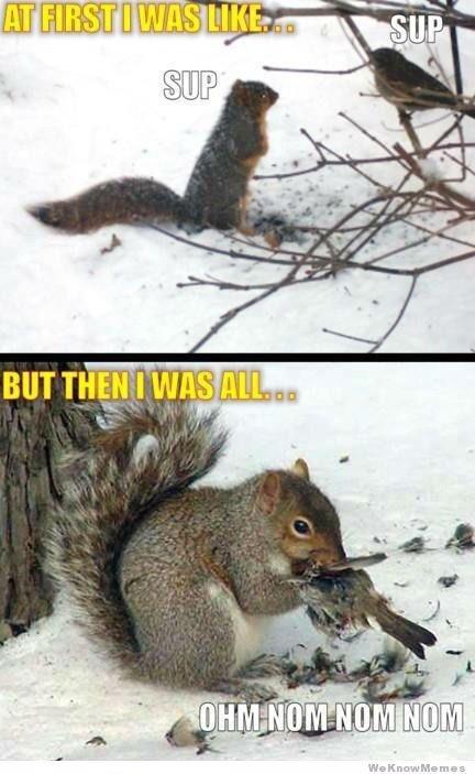 squirrels on bath salts. drugs are bad mkay.