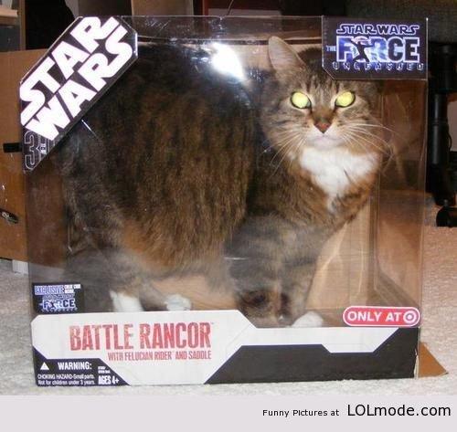 "Star Wars Cat. . Funny PI-: tureen at "" '. I laughed harder than I should have at this."
