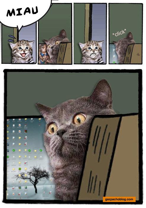 stare cat. .. Just great