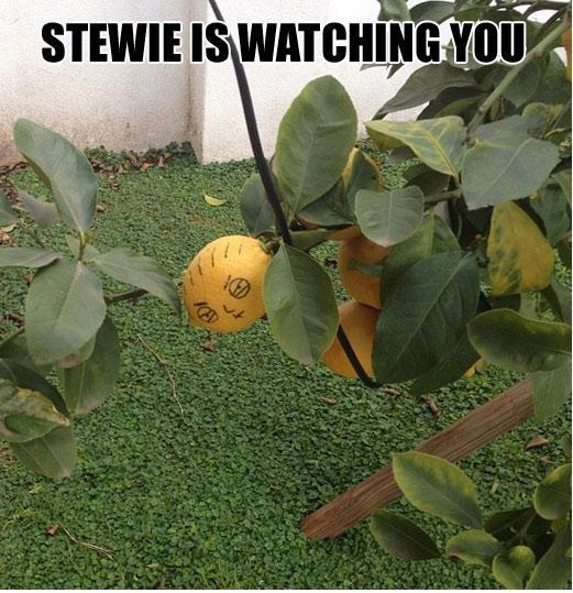 Stewie. . Cear,