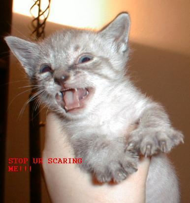 Stop Ur Scaring Me. .. russianbro Kitten Cats Animals