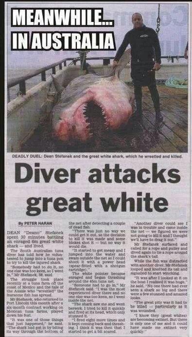 "'Straya. . Diver attacks i, great white 'i, PIN' In ""Aged Brattah I mud"", '"" iaio-, an u wanna Tti"". tuaght' r. derrer,. e. ihre. Thr smilie tock pun - we ""lete"