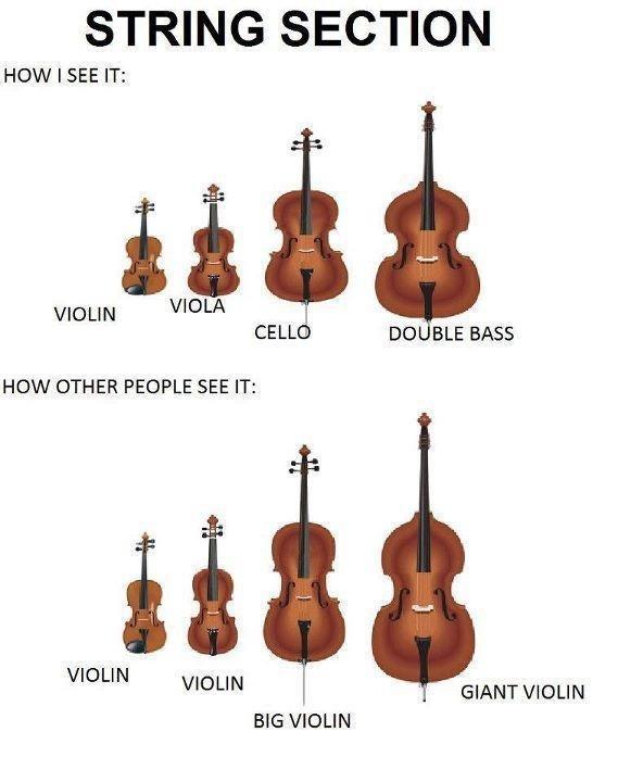 String section. [ Loading description... ]. STRING SECTION HOW I SEE IT: VIOLIN VIOLA I CELLE DO BLE BASS HOW OTHER PEOPLE SEE IT: BIG VIOLIN. How I see it.