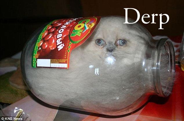 Stupid Cat 3. .