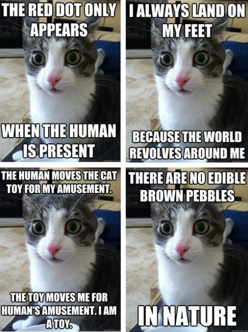 Sudden Clarity Cat. . Iii, PRESENT (ll.' ME ulmers. Cat thread.