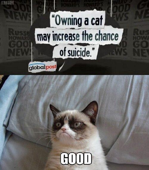 suicide. . iii/. Sure...suicide... cat suicide