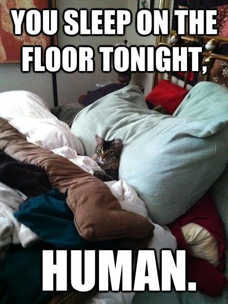 Superior cat is superior.... Cats....