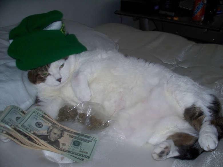 Supreme Dealer. dealer cat.