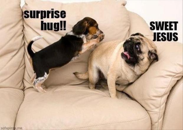 Surpirse.....Surprise....... .