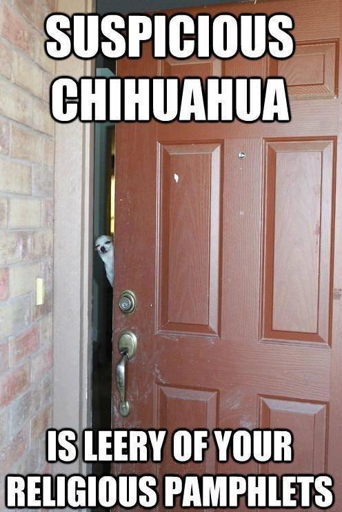 Suspicious Chihuahua. is leery of your religious pamphlets. r' lilfmb L Luminous. inb4 ola ke kiere