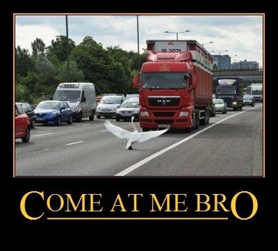 Swan bro. . COME. AT 1/ BRO