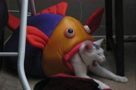 Swim... you fools!. .