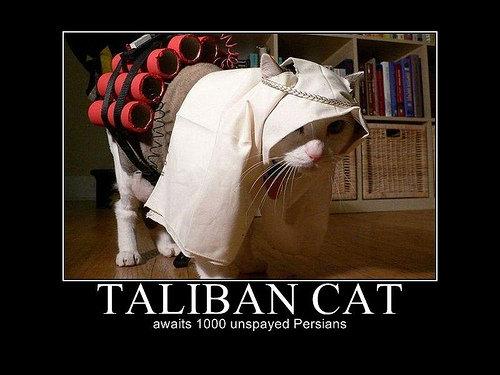 Taliban Cat. . CAT unspaced