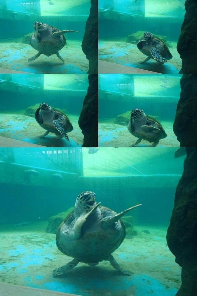 Teenage Mutant Dancing Turtle. Happiest turtle I have seen.